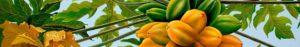 Papaia fermenti latici integratore Coral