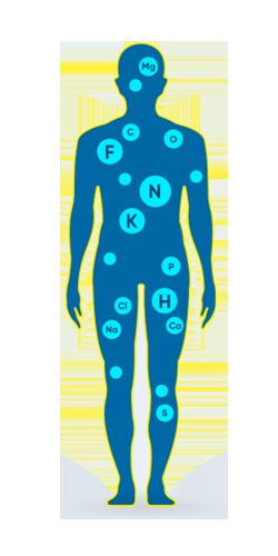 corpo umano è una simbiosi tra acqua ed elementi chimici
