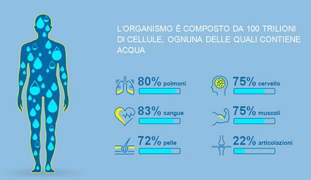 percentuale di acqua negli organi